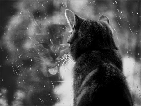 window cat najma rain