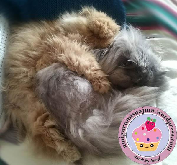 tuchi y pandora gatos persas