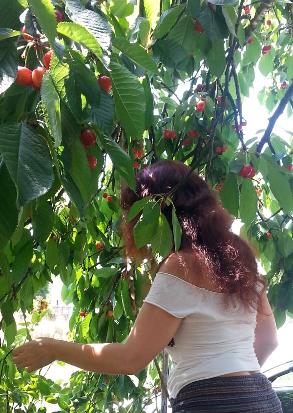 najma picking cherries