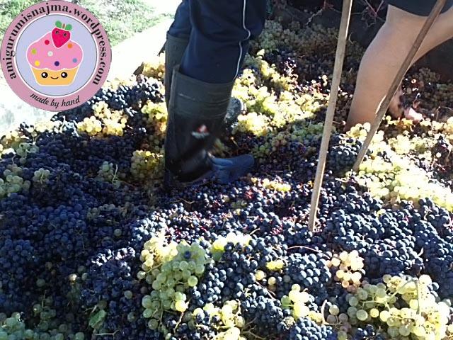 vendimia vineyard pisando uvas najma