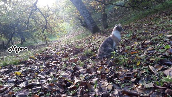 gato monte castañas
