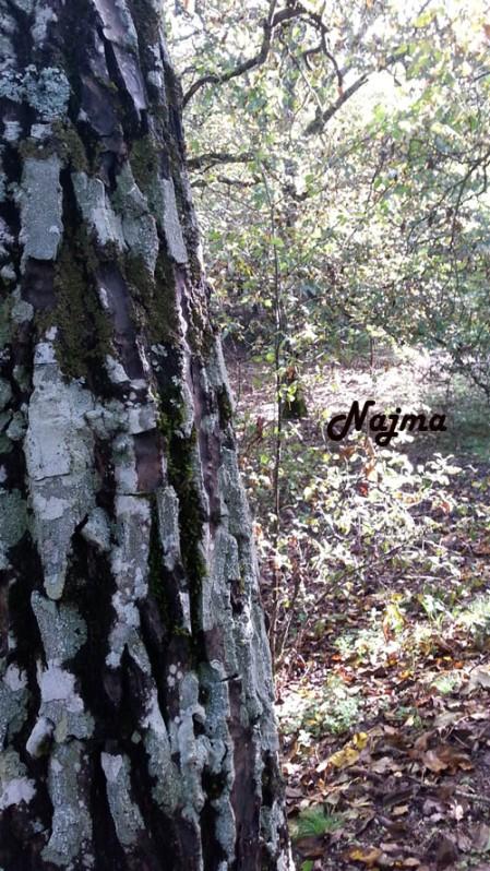 bosque castaños