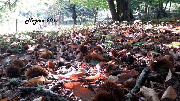 najma castaños otoño