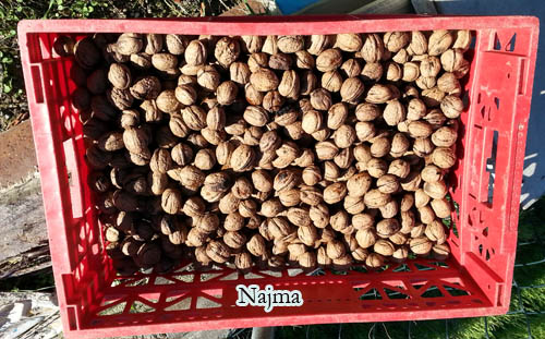 nueces nuts dry fruit