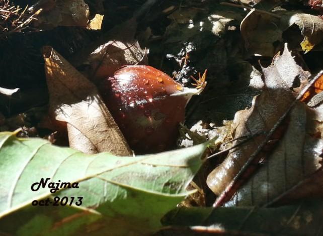 castañas otoño najma