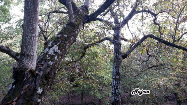 otoño corullon najma autumn