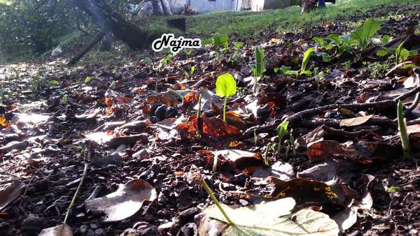 san fiz corullon otoño autumn