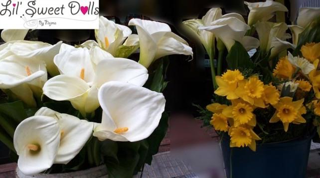 cala, lily flower