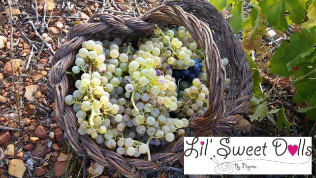 vendimia bierzo racimos uvas